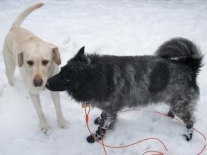Maya and Pierson Giving Snow Kisses