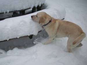 My Dog Maya Scales 10.5 Inches of Snow